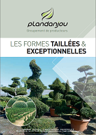 formes-taillees.miniature